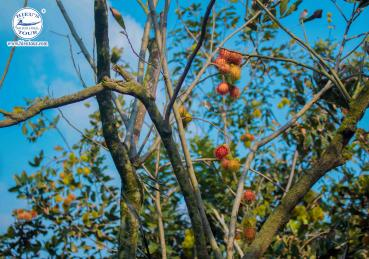 11 FAMOUS ORCHARDS IN MEKONG DELTA